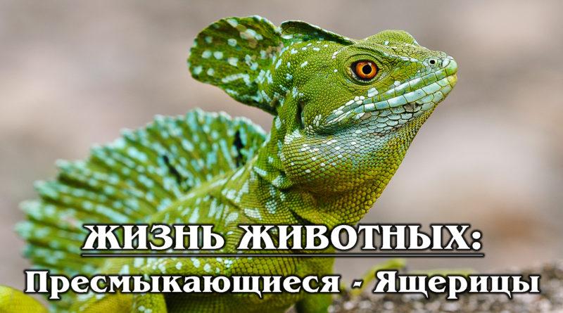 ЖИЗНЬ ЖИВОТНЫХ: Пресмыкающиеся - Ящерицы