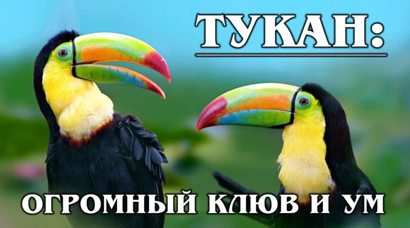 ТУКАН: Умная птица с большим клювом