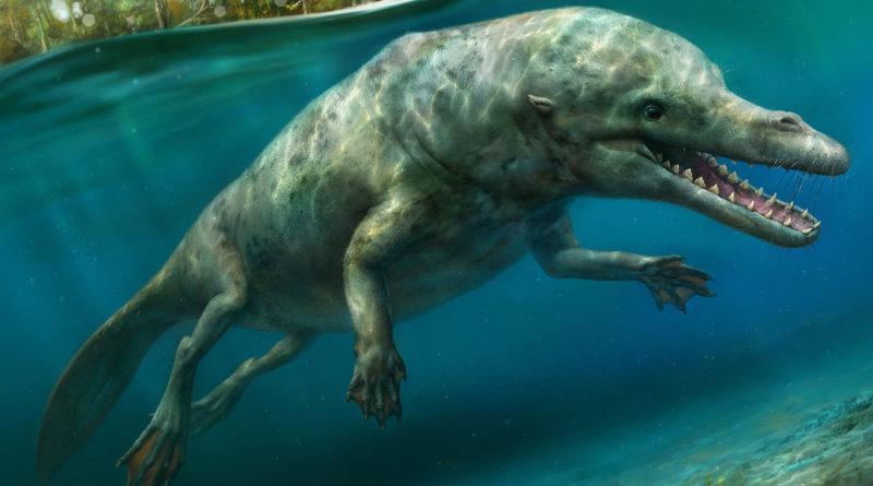 Амбулоцет: Предки китов?