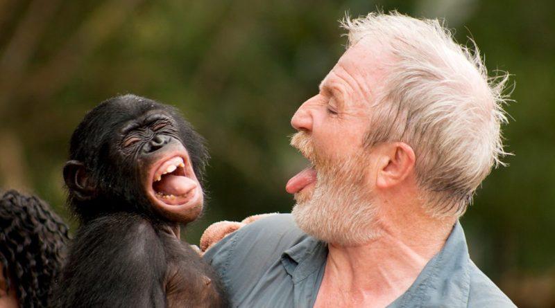 Человек: Обезьяноподобный примат