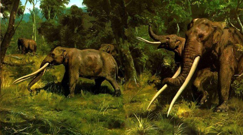Мамонт: Предок слонов?
