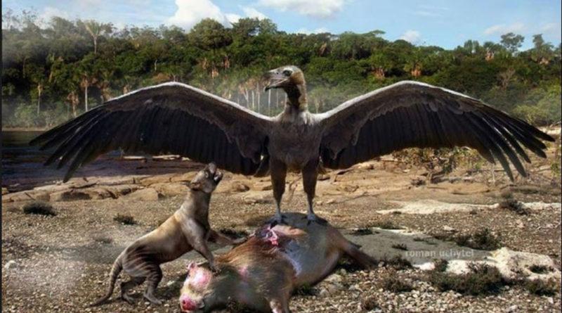 Аргентавис: Крупнейшая доисторическая птица