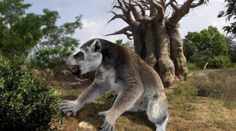 Мегаладапис: Доисторический лемур