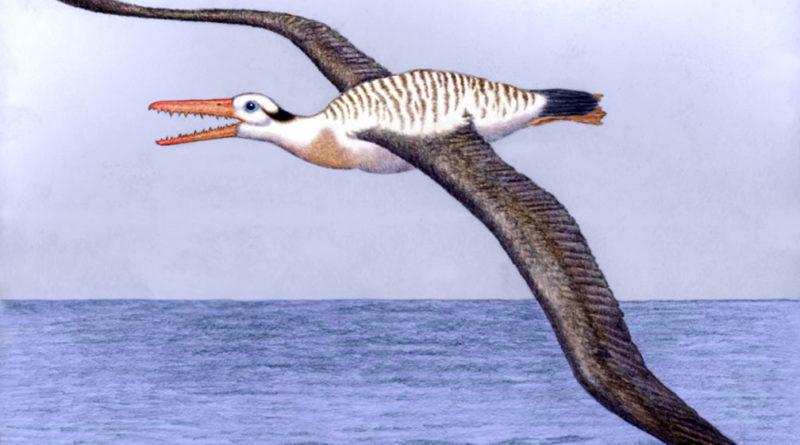 Пелагорнис: Доисторическая чайка
