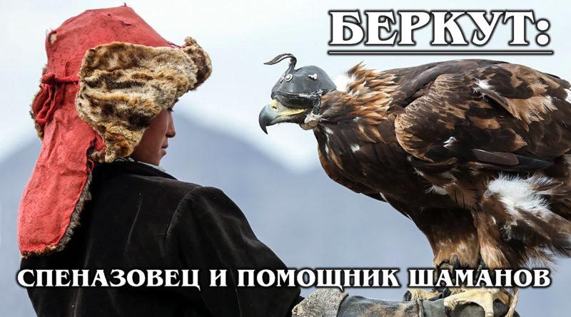 БЕРКУТ: Самый большой орел и владыка воздуха не любит людей