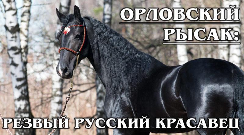 ОРЛОВСКИЙ РЫСАК: Лучшая в мире порода резвых лошадей – из России