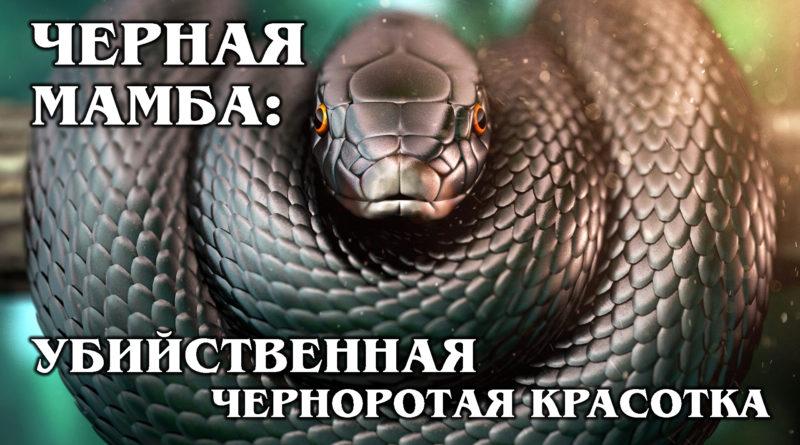 ЧЕРНАЯ МАМБА: Самая опасная и быстрая в мире змея