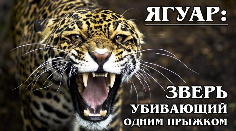 ЯГУАР: Американский ЦАРЬ в Мире Животных
