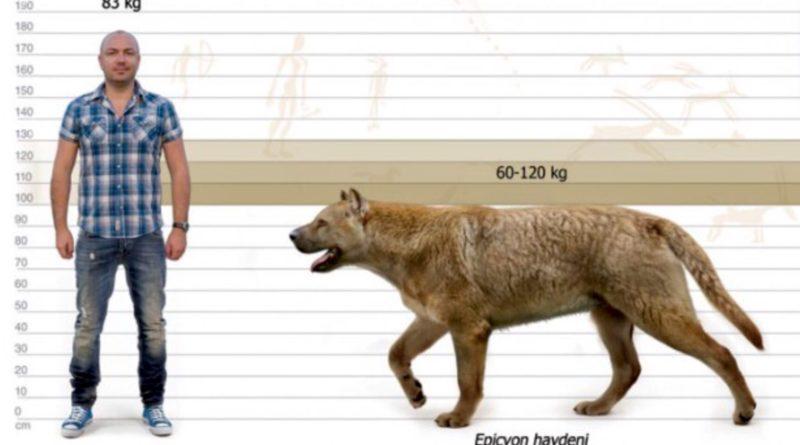Эпицион: Самая большая доисторическая собака