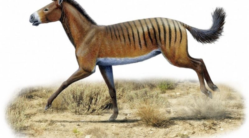 Гиракотерий: Доисторический предок лошадей размером с зайца