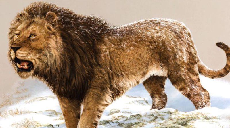 Американский лев: Крупнейший котик в истории планеты Земля