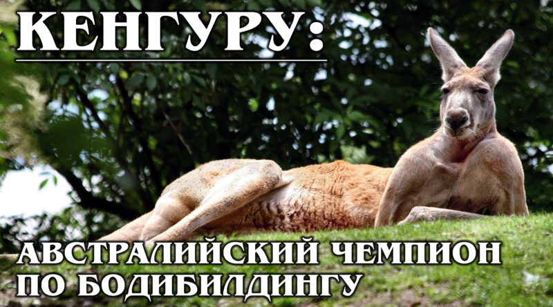 КЕНГУРУ: Чудеса эволюции от австралийского чемпиона по прыжкам в длину | Интересные факты о кенгуру