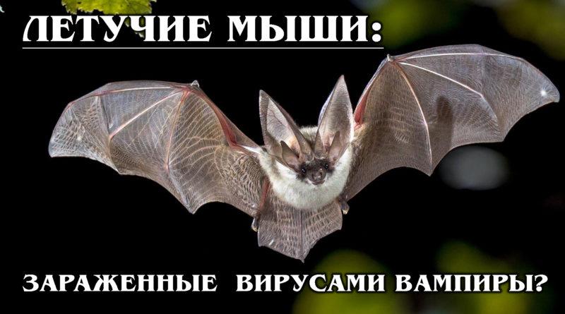 ЛЕТУЧИЕ МЫШИ: Опасные рукокрылые вампиры или милые вегетарианцы
