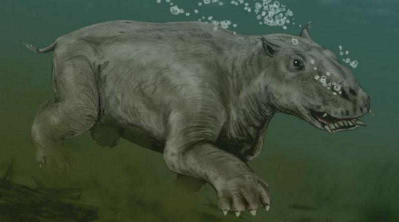 Талассокнус: Доисторический подводный ленивец