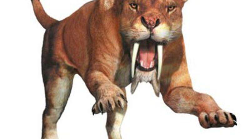 Тилакосмил: Самые большие зубы среди саблезубых