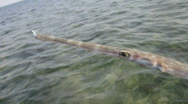 Гладкая свистулька: Смешной морской обитатель