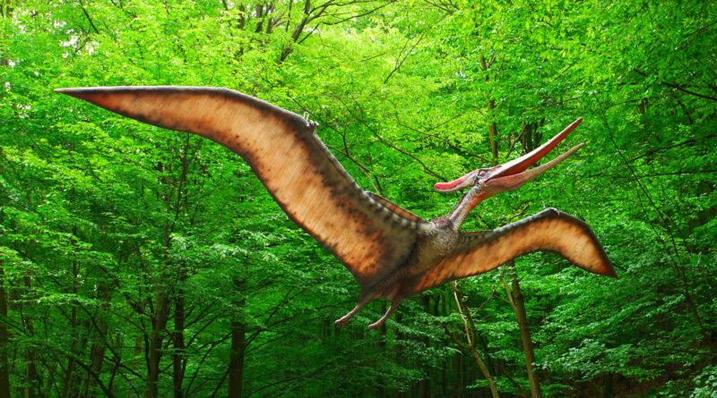 Птеродактиль: Динозавр размером с ворону
