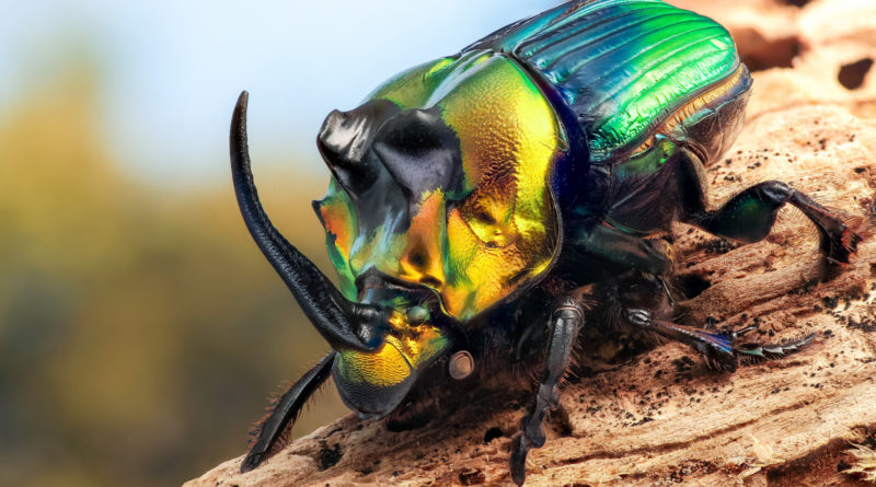 Жук-носорог: Бронированный титан мира насекомых