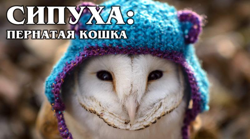 СИПУХА: Самая красивая сова с мордочкой в форме сердца | Интересные факты про птиц и животных
