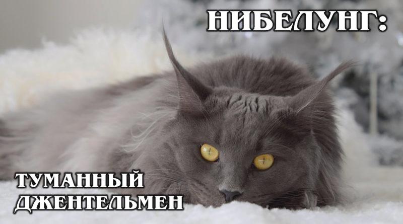 НИБЕЛУНГ: Аристократ из Америки и родственник русской голубой кошки | Интересные факты про кошек | Породы кошек