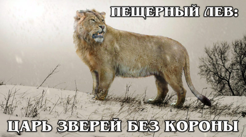 ПЕЩЕРНЫЙ ЛЕВ: Самый большой лев в истории гриву не носил | Интересные факты про львов и животных