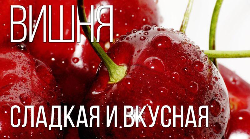 ВИШНЯ: Культовое дерево России и очень вкусное лакомство | Интересные факты про вишню и растения