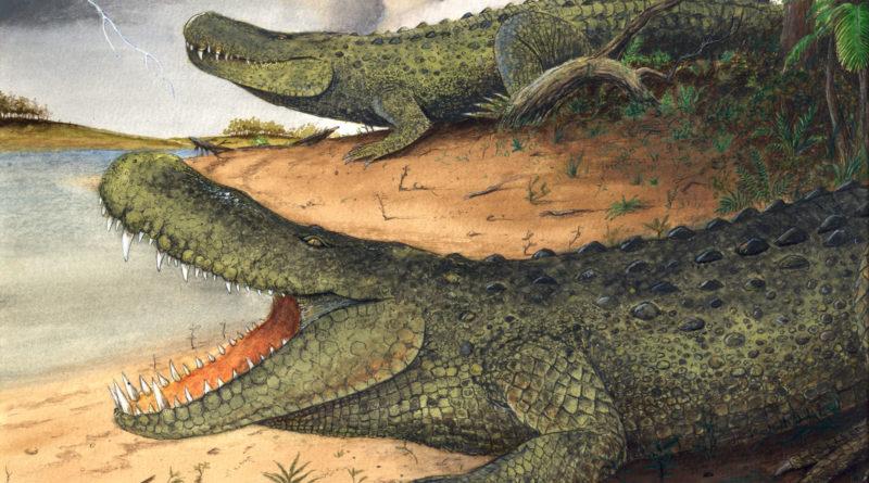 Стоматозух: Огромный и безопасный доисторический крокодил