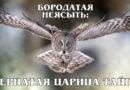 БОРОДАТАЯ НЕЯСЫТЬ: Пернатая таежная красавица из семейства совиных | Интересные факты про сов и животных