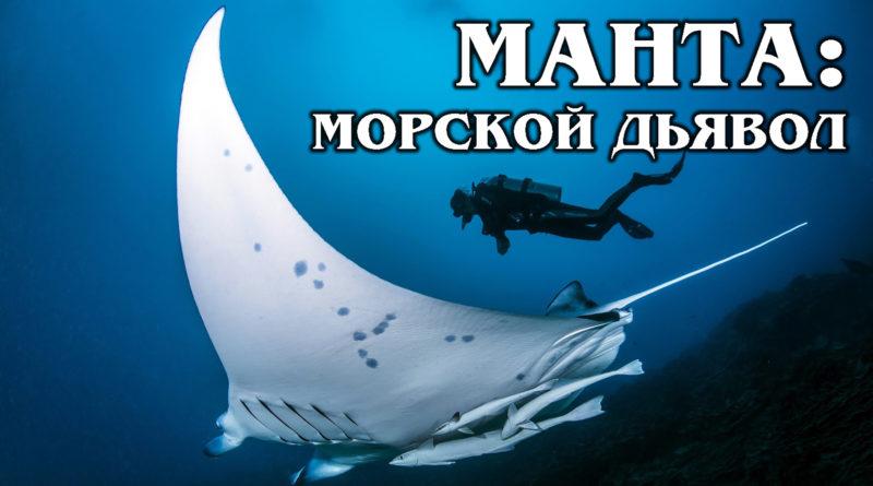 МАНТА (ГИГАНТСКИЙ МОРСКОЙ ДЬЯВОЛ): Самый большой скат в мире | Интересные факты про морских и речных обитателей