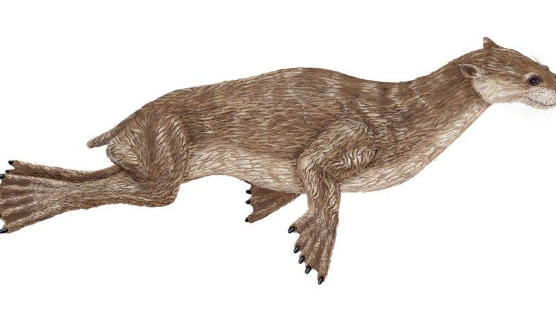 Эналиаркт: Доисторический предок тюлленей