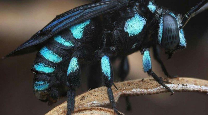 Неоновая пчела-кукушка: Не нормальная пчела