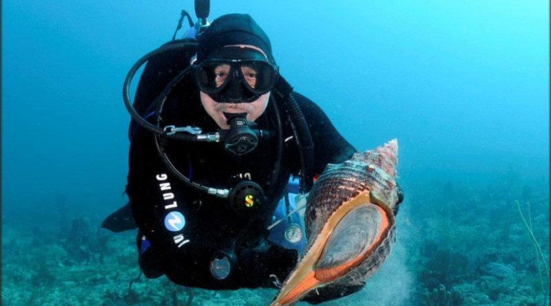 Лошадиная улитка: Огромный моллюск