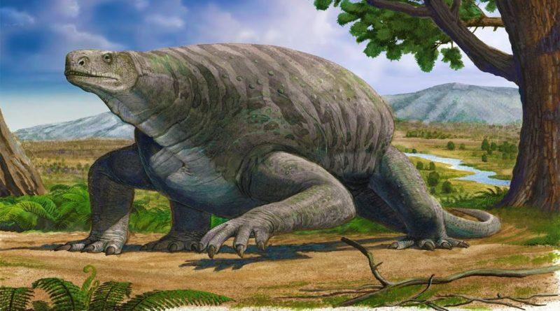 Котилоринх: Пример начала эволюции