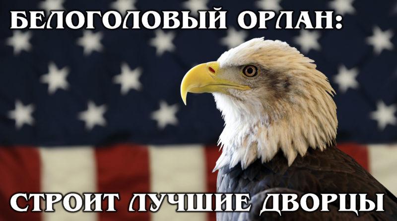 БЕЛОГОЛОВЫЙ ОРЛАН: Главный символ США - совсем не орел | Интересные факты про орлов, птиц и животных