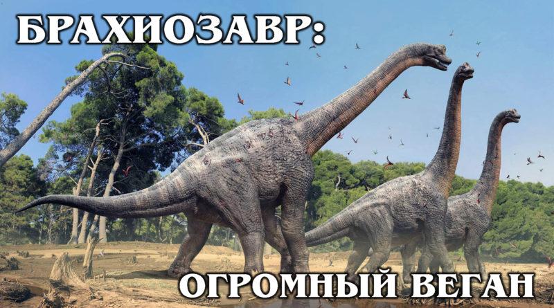 БРАХИОЗАВР: Почти самый высокий и большой травоядный динозавр | Интересные факты про динозавров и доисторических животных