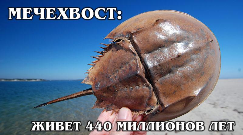 МЕЧЕХВОСТ: Одно из древнейших существ на Земле | Интересные факты про морских обитателей и животных