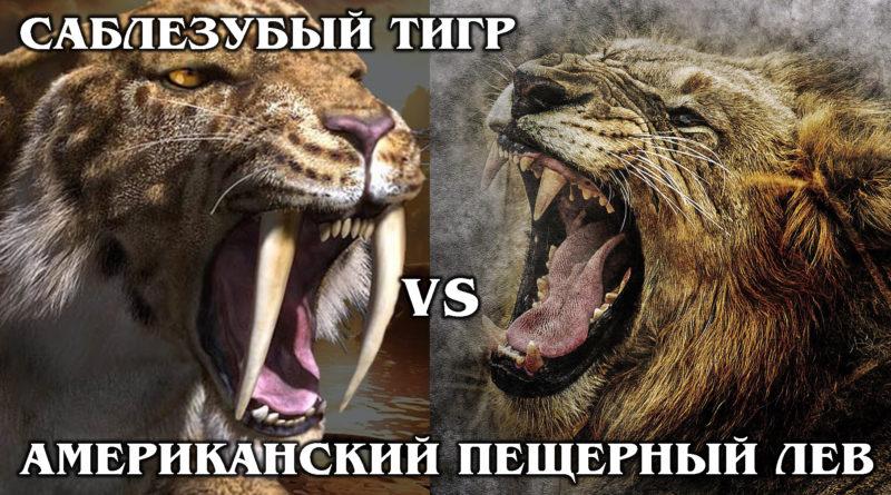 САБЛЕЗУБЫЙ ТИГР VS АМЕРИКАНСКИЙ ПЕЩЕРНЫЙ ЛЕВ: Кто сильнее? Интересные факты про доисторических животных