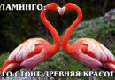 ФЛАМИНГО: Древняя птица с перевернутым ртом любит есть раков | Интересные факты про птиц животных