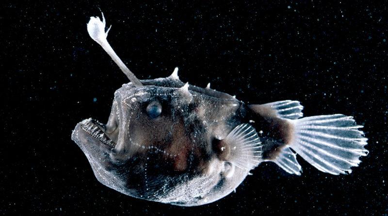 Рыба-телескоп: Жуткое порождение глубоководного мрака