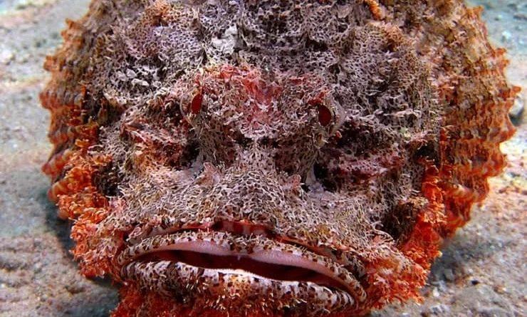 Рыба-камень: Её стоит остерегаться на отдыхе у моря