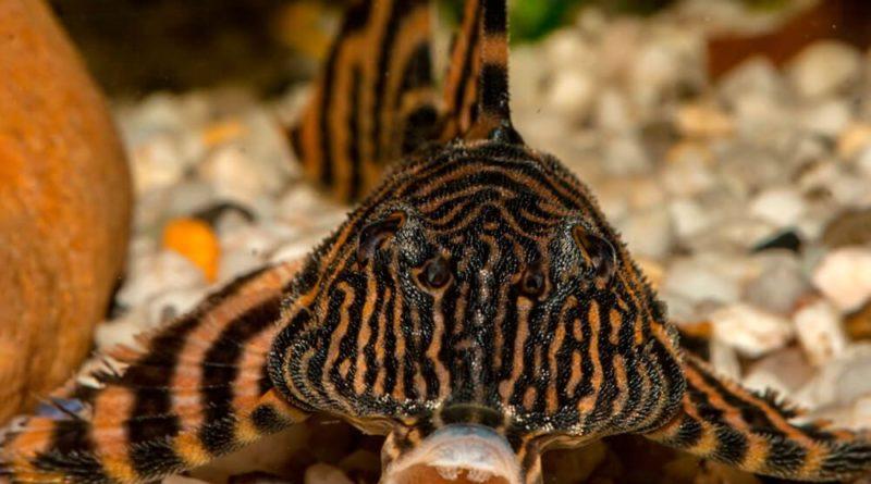Рыба-лопата: Наглядный пример эволюции