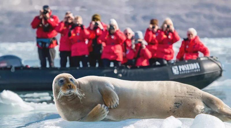 Морской заяц: Обаятельный тюлень