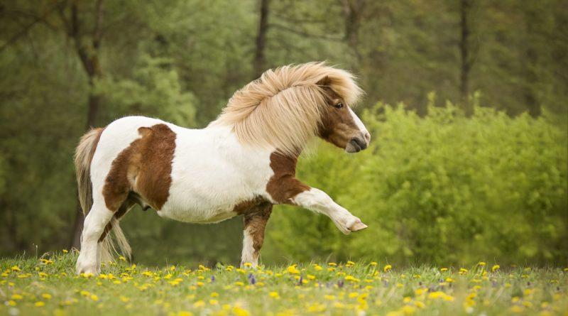 Пони: История появления