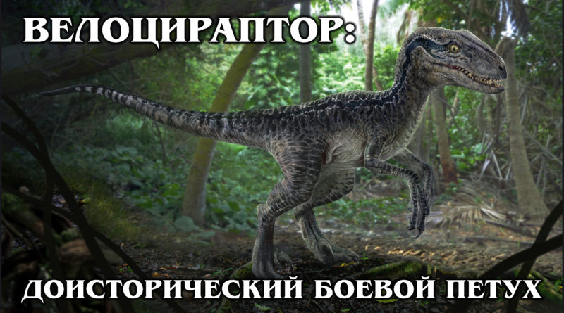 ВЕЛОЦИРАПТОР