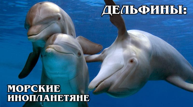ДЕЛЬФИНЫ: Морские «инопланетяне», которые не спят | Интересные факты про дельфинов и морских обитателей
