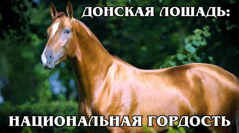 ДОНСКАЯ ЛОШАДЬ: Национальное достояние России | Интересные факты про породы лошадей и животных