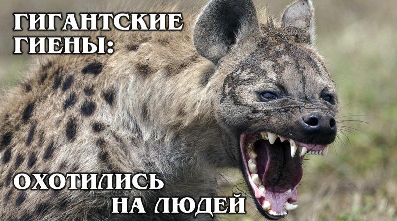 ПЕЩЕРНЫЕ ГИЕНЫ: Гигантские гиены конкурировали с первобытными людьми | Интересные факты про доисторических животных