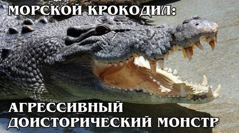 ГРЕБНИСТЫЙ КРОКОДИЛ: Крупнейший и сильнейший наземный хищник | Интересные факты про крокодилов
