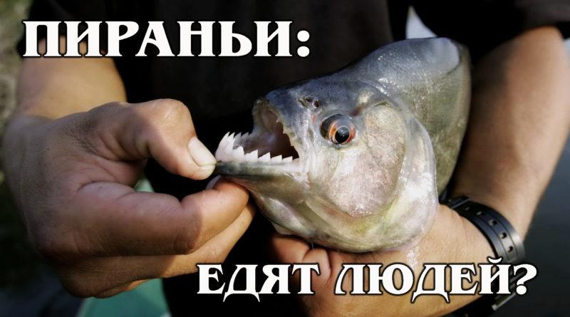 ПИРАНЬИ: «Речные гиены» - это опасные хищники или пугливые рыбки? Интересные факты про речных обитателей