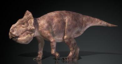 Уданоцератопс: Демоверсия трицератопса